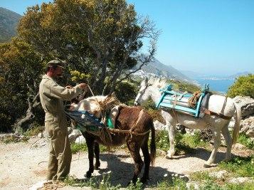 Un homme et son âne, sur l'île d'Amorgos.