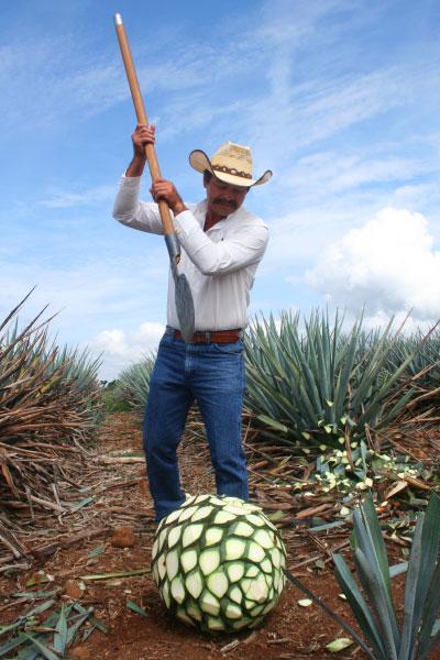 Mexique: Complètement tequila!
