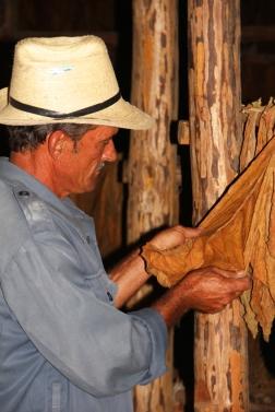 Artisan dans un séchoir à tabac (à Cuba)
