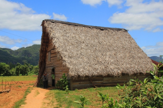 Séchoir à tabac, dans la campagne de Pinar del Rio. (Cuba)