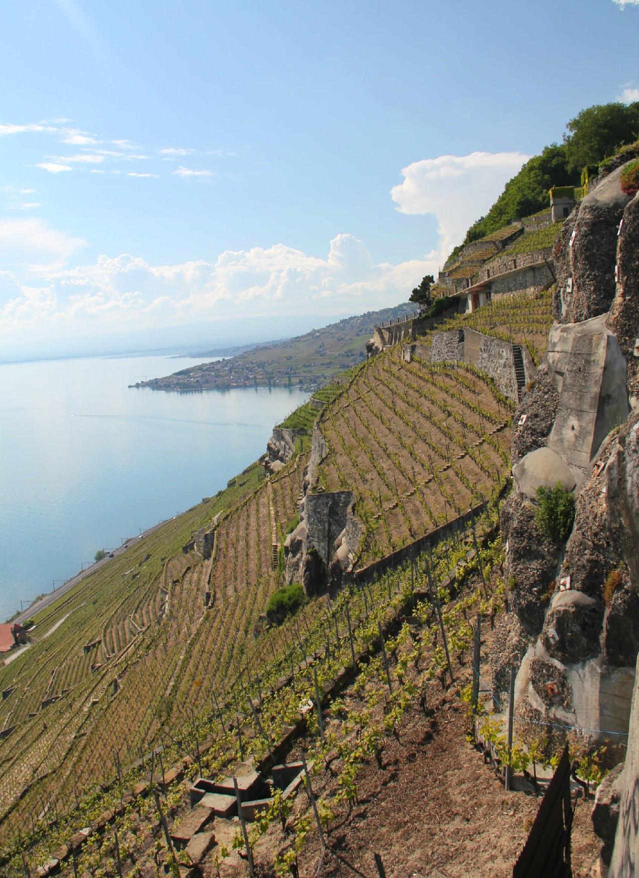 Suisse: Vins et fromage, enbicyclette