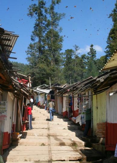 La migration annuelle des monarques fait vivre toute une communauté.
