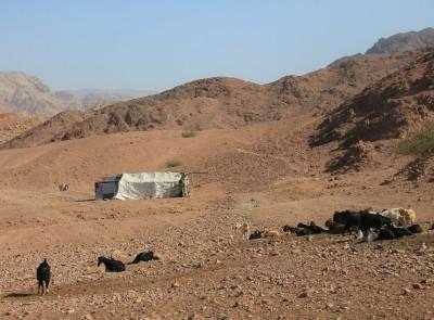 Famille de bédouins et leurs chèvres, dans la Réserve de Dana (Jordanie)
