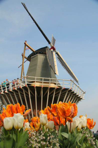 Les Pays-Bas: vive la tulipomanie!