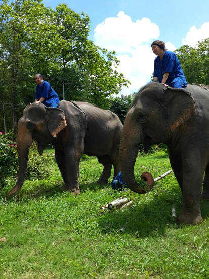 Promenade au Elephant Conservation Center