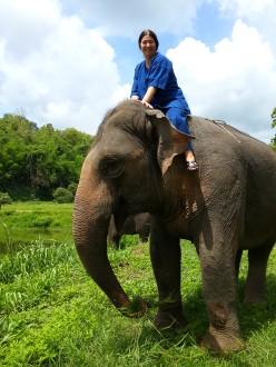 Au Elephant Conservation Center, près de Lampang