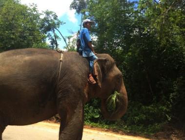 Un gardien au Centre de conservation des éléphants