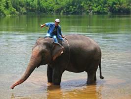 Un véritable gardien d'éléphants, au Elephant Conservation Centre