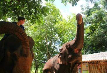 Le Centre de conservation des éléphants, près de Lampang
