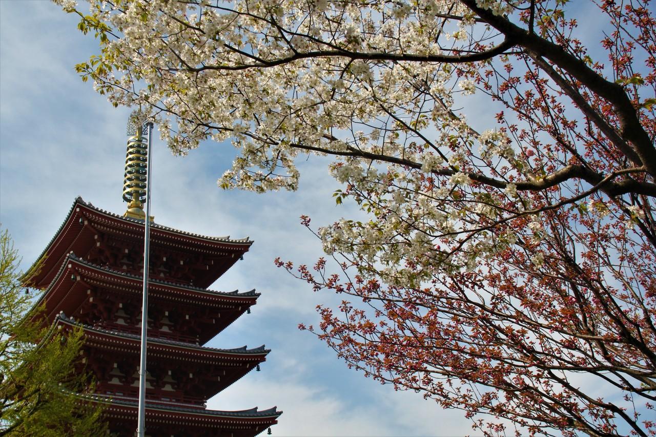 Japon: Tokyo, auprintemps