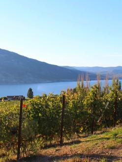 Vignoble de la vallée de l'Okanagan