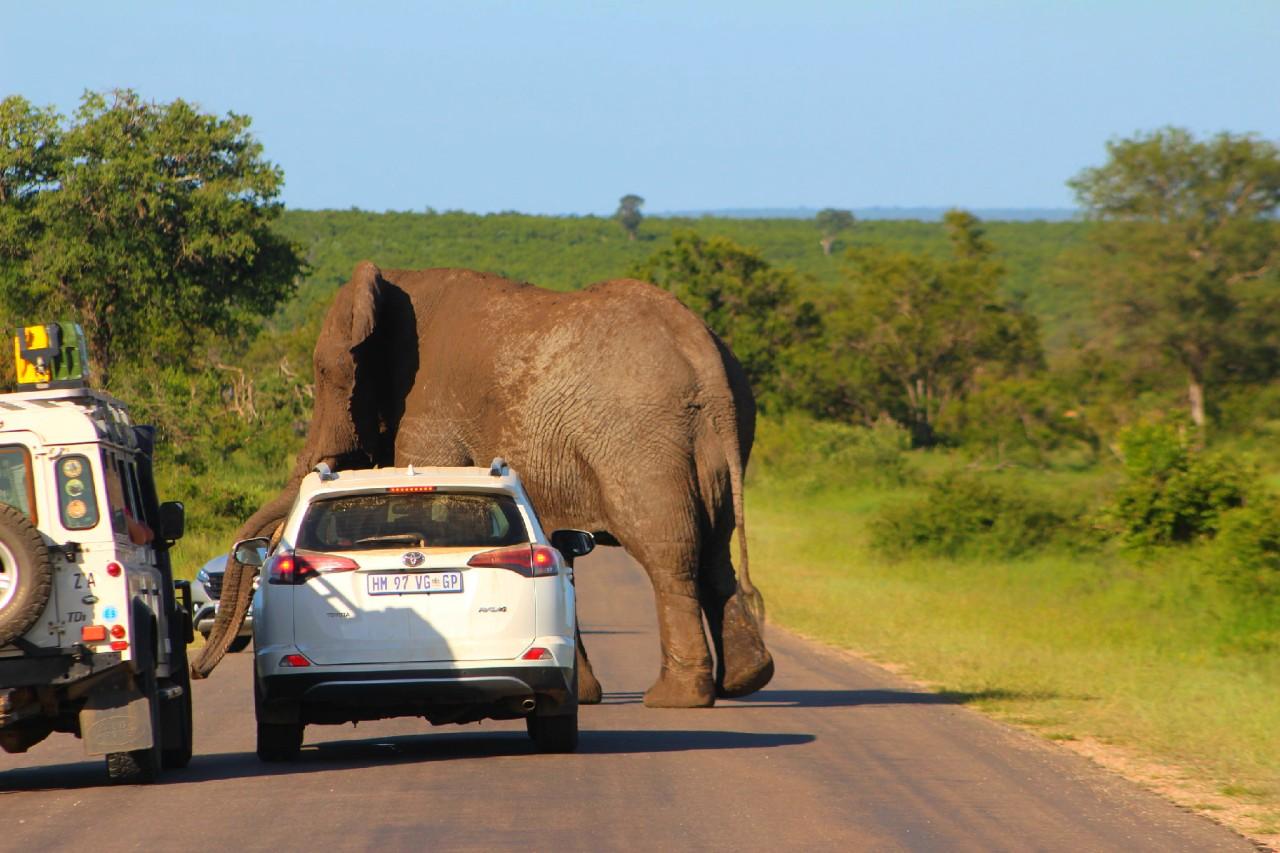 «Road trip» de filles en Afrique dusud