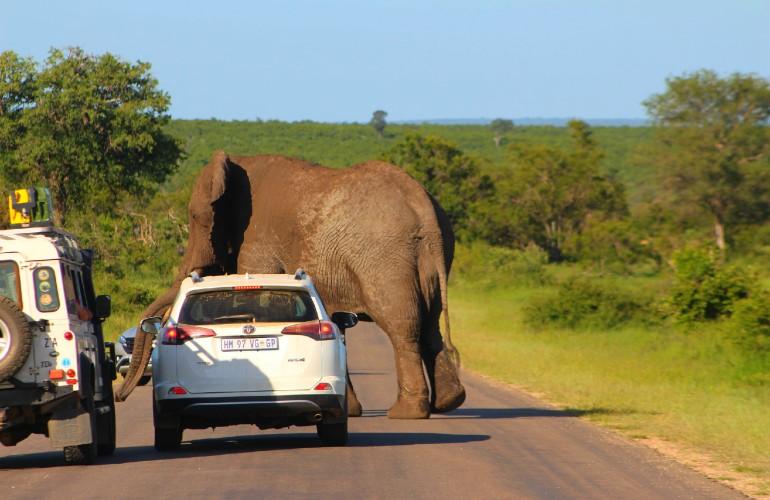 Éléphant, au Parc Kruger