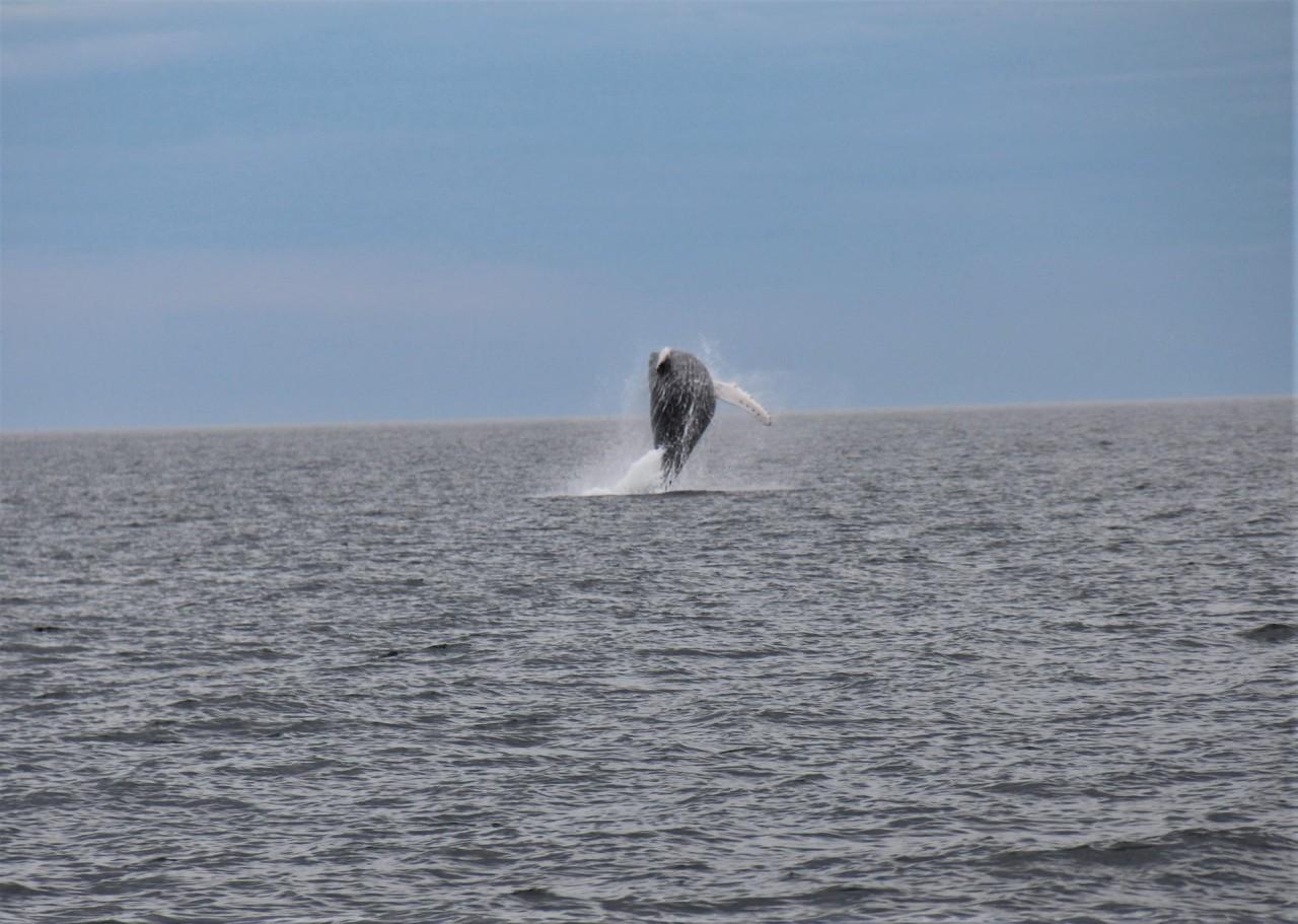 Gaspésie: Quoi faire, côté mer?