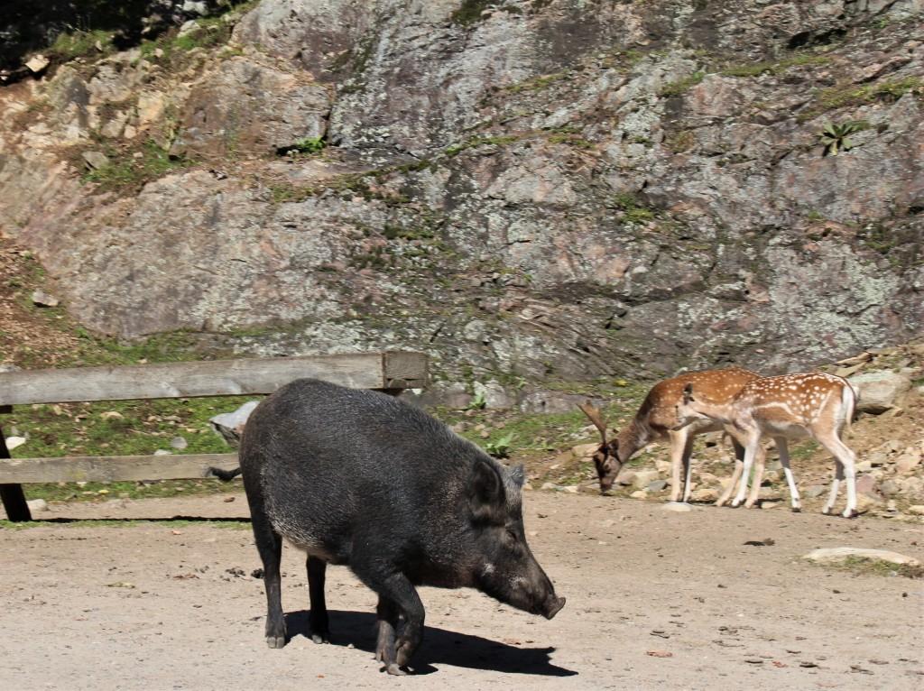 Le Parc Oméga compte plusieurs espèces