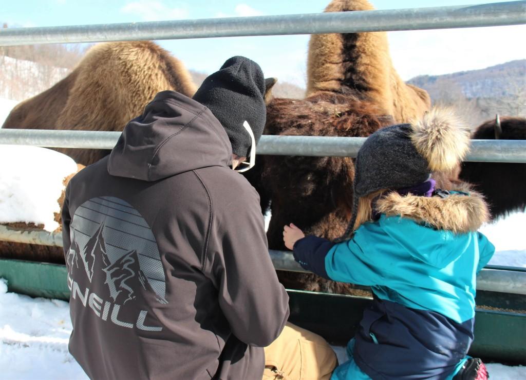 Le doyen des bisons se laisse flatter