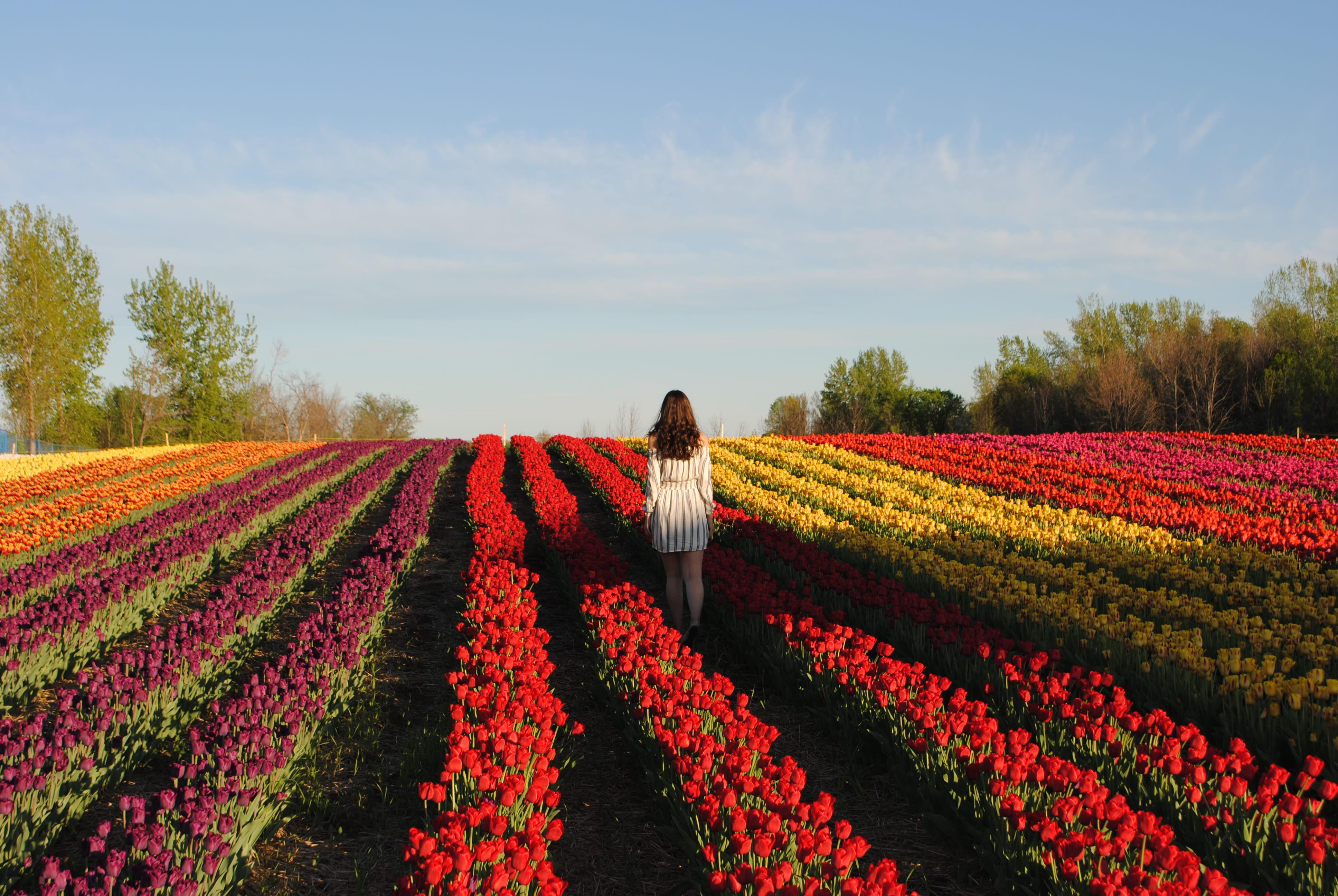 Fille dans champs de tulipes.ca à Laval