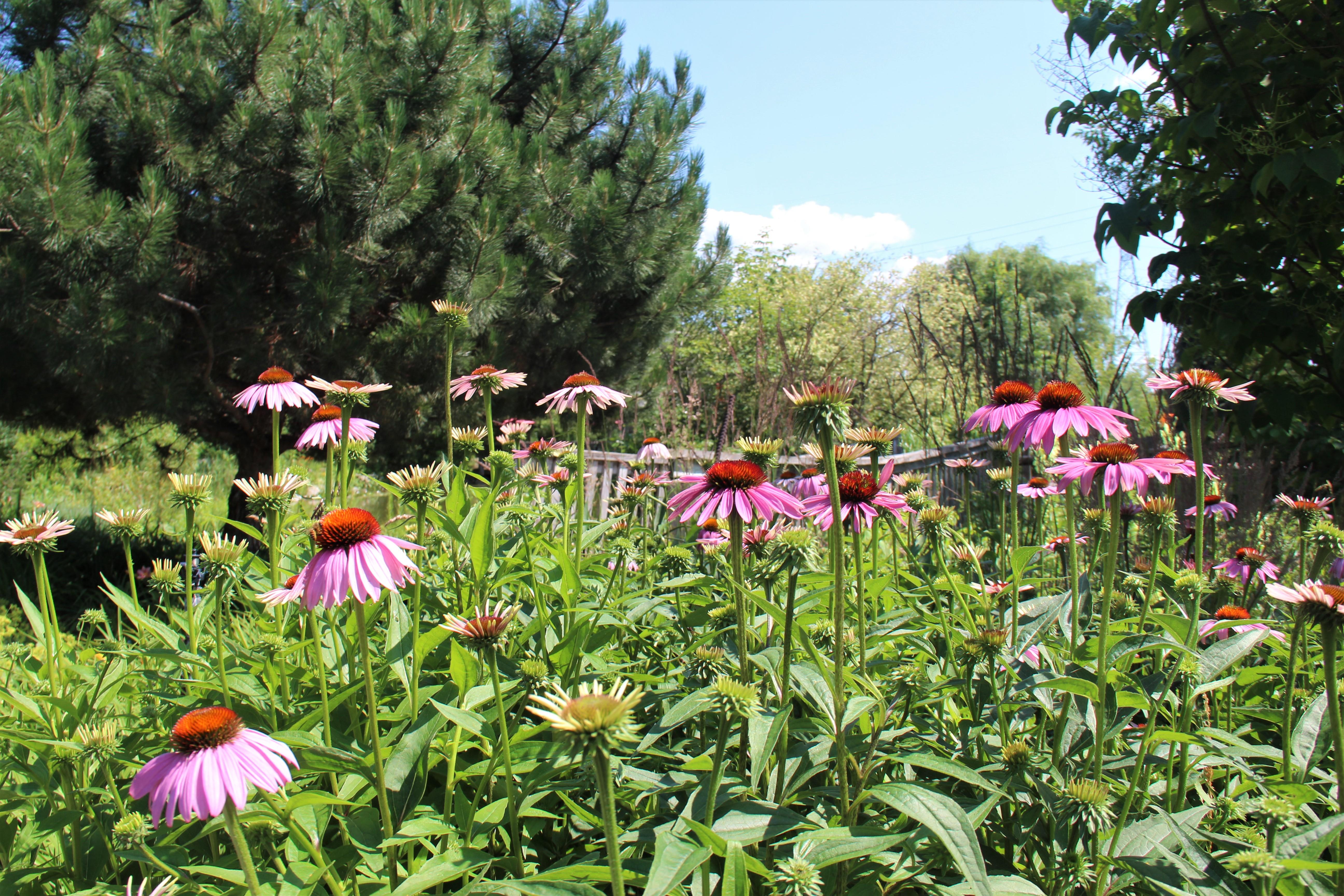 Jardins Michel Corbeil, dans les Basses-Laurentides